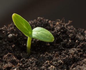 new plant coming up from the dirt   Healing From Depression   Therapy Services   Boulder, CO 80305